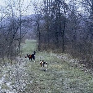 Dogs playing at Fetch Dog Park in Vermilion County Illinois