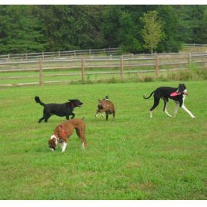 Dogs of Fetch Dog Park in Danville Illinois