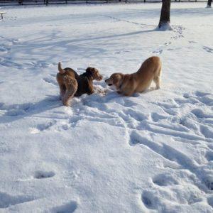 Dogs of Fetch Dog Park